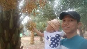 Pohon kurma berbuah lebat di Cikopak Purwakarta. Netizen jadi berdebat