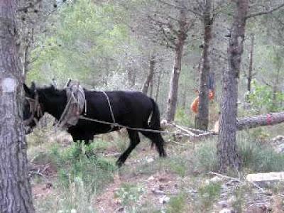 Rossegadós, mula, macho, arrossegá, fusta