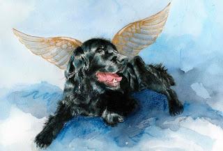"""Carta de un perro a su dueño desde el cielo : """"Te estaré esperando"""""""
