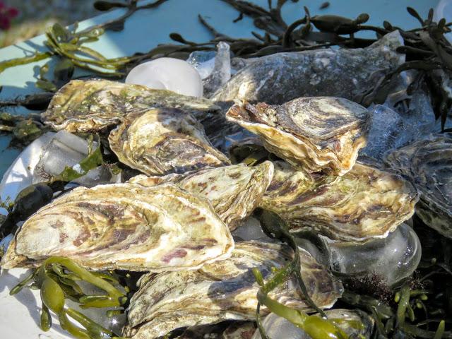 Fresh County Sligo oysters