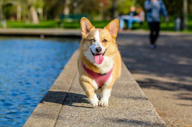 Pet Insurance Policy Compare The Market | General Health Dog Insurance