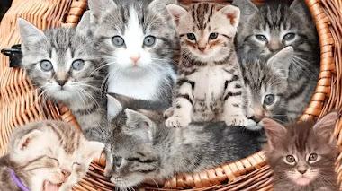 ¿Que come un gato bebé?