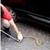 Cobra é capturada pelo Corpo de Bombeiros em carro no centro de Cajazeiras