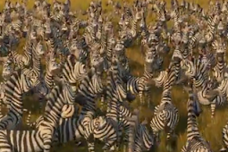 Fabel - Zebra Yang Pemberani