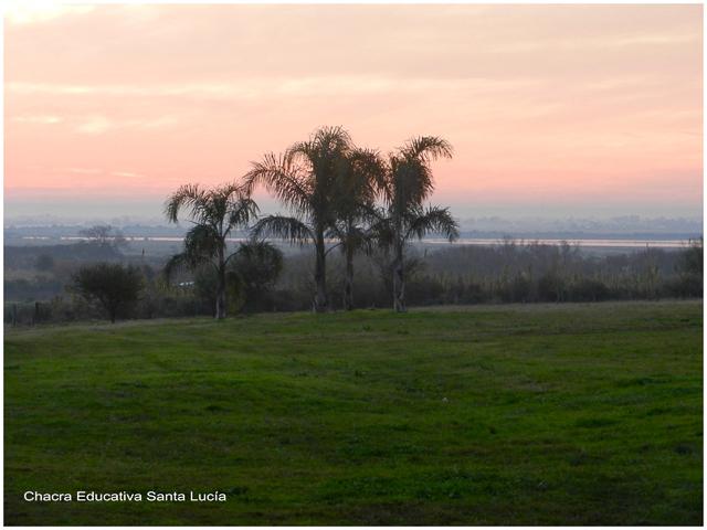 Las pindó al atardecer - Chacra Educativa Santa Lucía