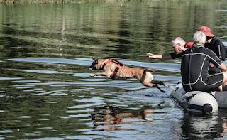 cães de busca e salvamento na água
