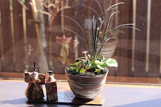 半月の陶盤にのったおわん型の鉢の山野草盆栽と立雛