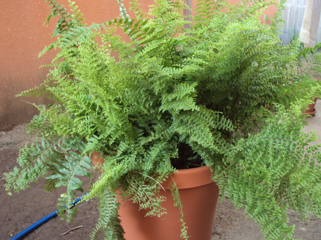 Secretos de mujeres plantas para el hogar seg n el feng shui for Plantas en casa segun feng shui