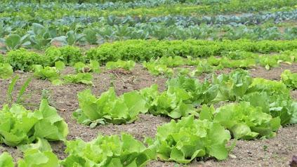 What is organic farming?