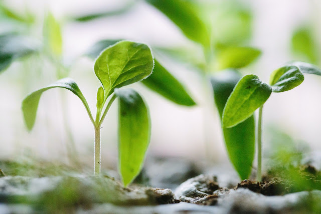 Green Plants on Soil | Photo by Francesco Gallarotti via Unsplash