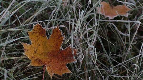 (ФОТО)МЧС России просит свердловчан быть бдительней из-за надвигающихся заморозков