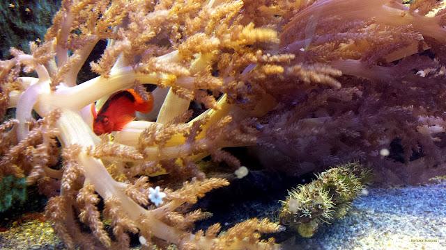 Oranje vis in aquarium
