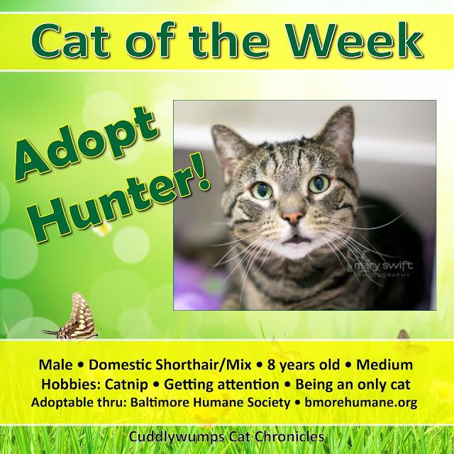 #adoptablecat #baltimorehumane