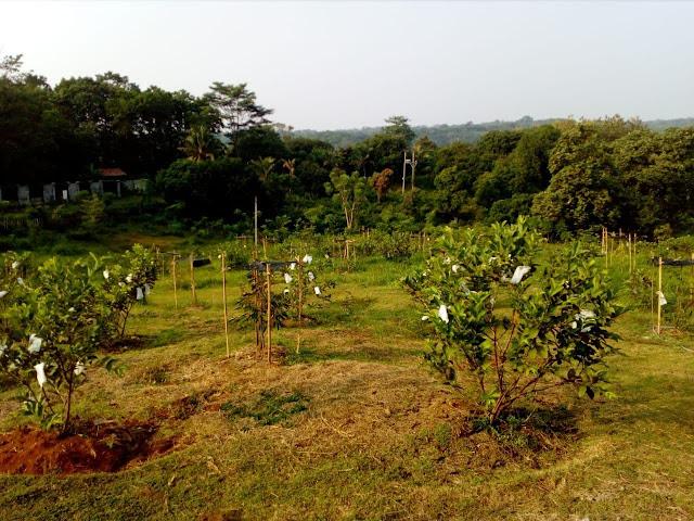 Taman Tahfidz Firdaus Purwakarta