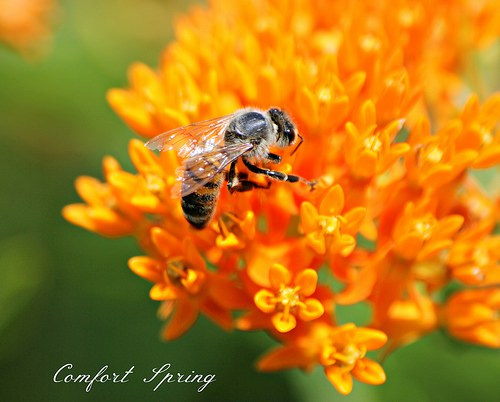 Garden Plants for Bees