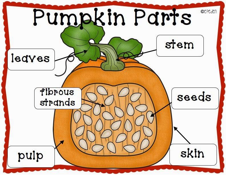 A Neighborhood Kindergarten : Pumpkin Patch CCSS Math