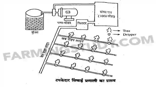 टपक सिंचाई या ड्रिप सिंचाई विधि क्या है, ड्रिप सिंचाई विधि, drip irrigation in hindi, ड्रिप सिंचाई विधि की कार्य प्रणाली, सिंचाई की विधियां, टपकेदार स