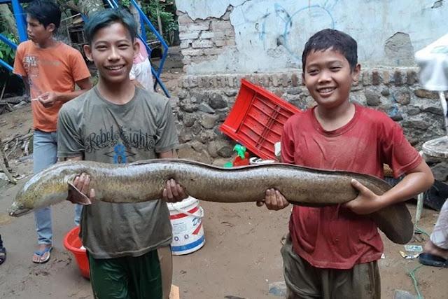 Usai Dilanda Banjir Bandang, Warga di Lebak ini Tangkap Ribuan Ikan Besar di Sungai Cianjuk