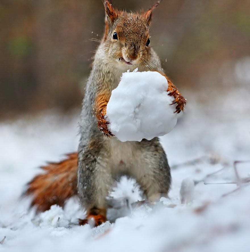 adorable squirrel photos vadim trunov-5