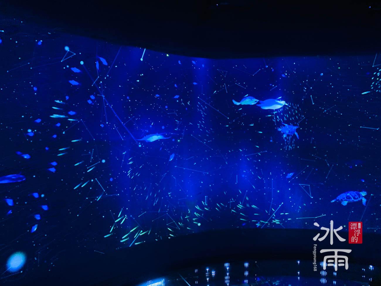 Xpark水族館|數位牆