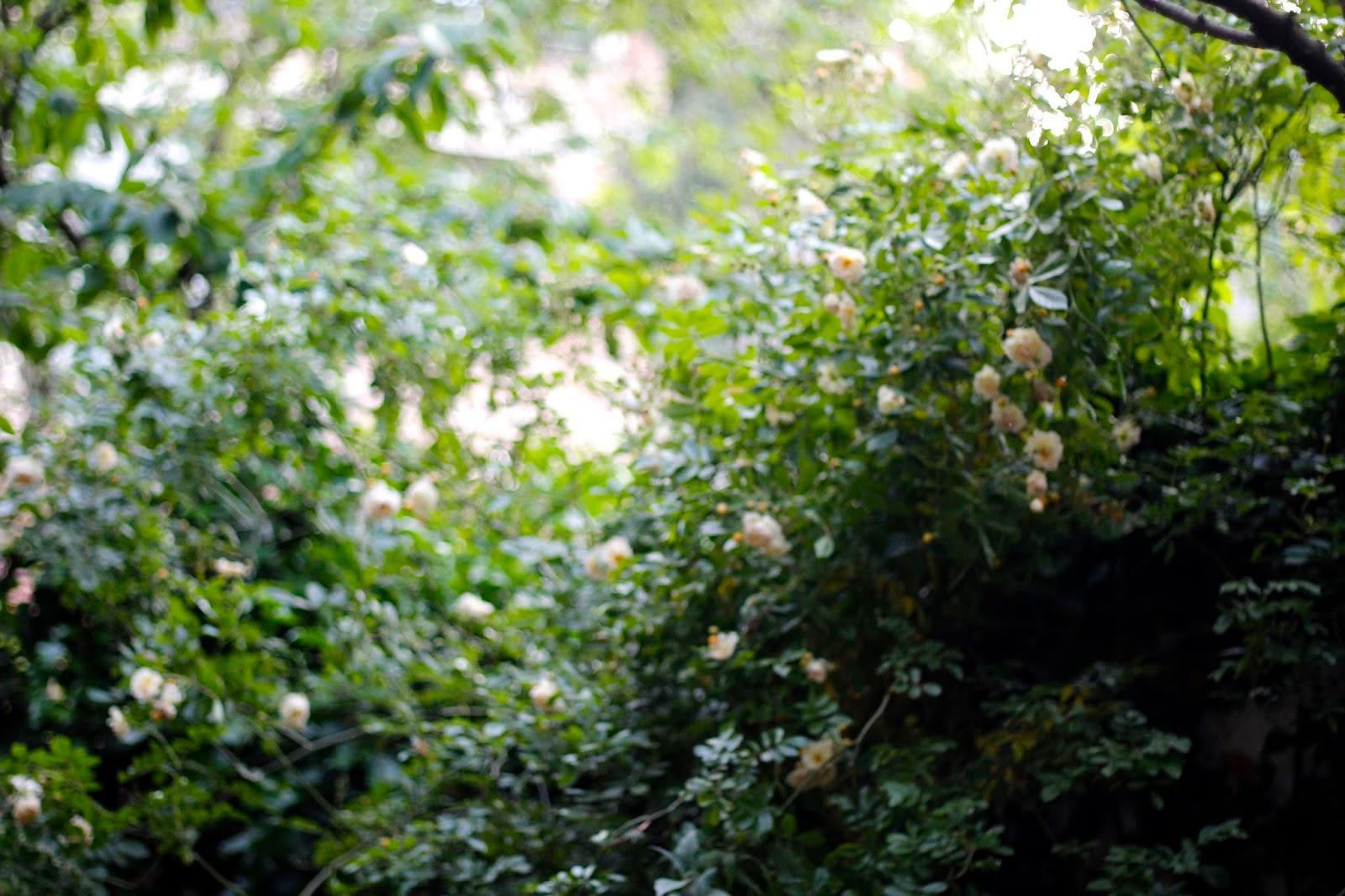 Quatre pommes for Jardin 10mg uses