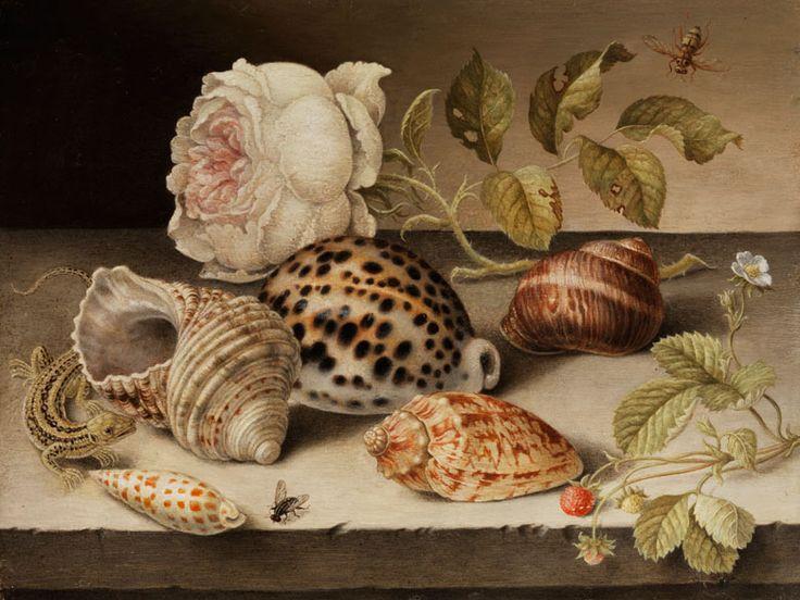 Chloe M Fischbach Shells In Dutch Still Life Painting
