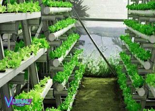 Ide Bisnis Rumahan Kebun Hidroponik