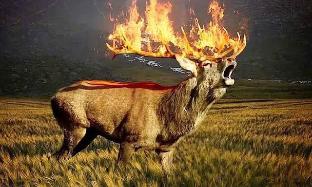 Простите нас животные! Простите нас наши леса! Страшные фото после пожара лесов СИБИРИ