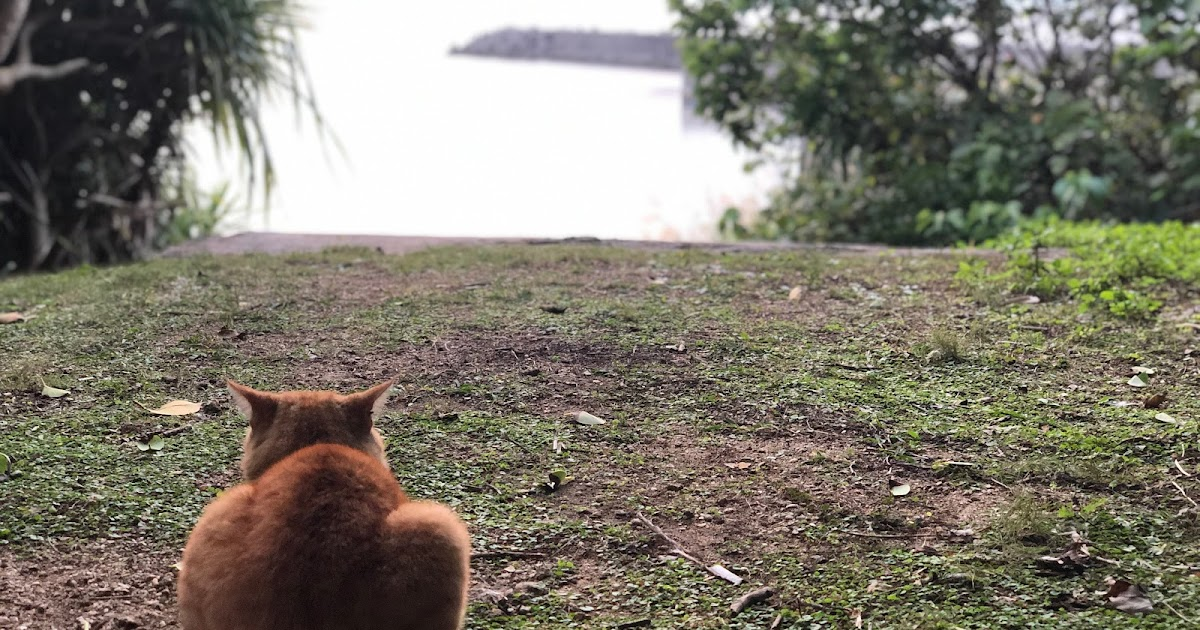 -Okinawa- Explore the island of God with cats