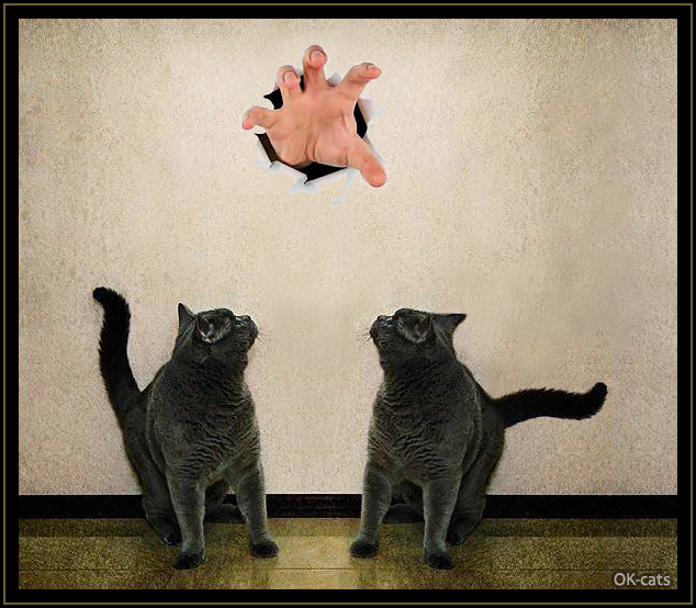 Photoshopped Cat picture • 2 blue cats scared by big human hand passing through wall. Human Monster wants to catch innocent cats