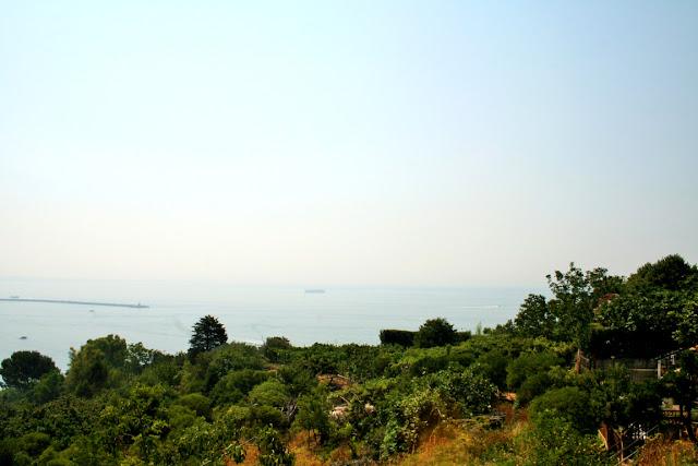 vegetazione, alberi, mare, acqua