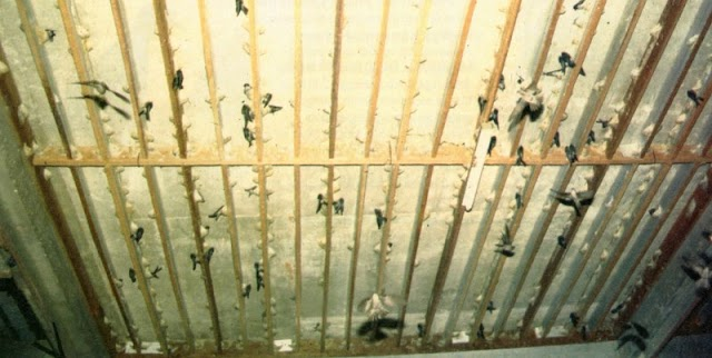 Solusi Walet Mogok Bersarang Dengan Menggunakan Menara Air