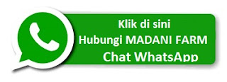 Hubungi Madani Farm melalui WhatsApp