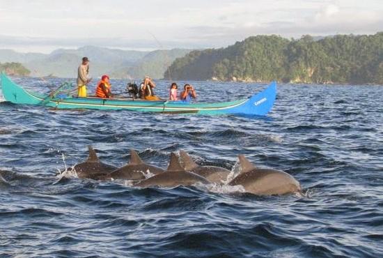 Wisata Teluk Kiluan Lampung, Tempat Terbaik Menyaksikan Habitat Lumba-Lumba di Alam Liar