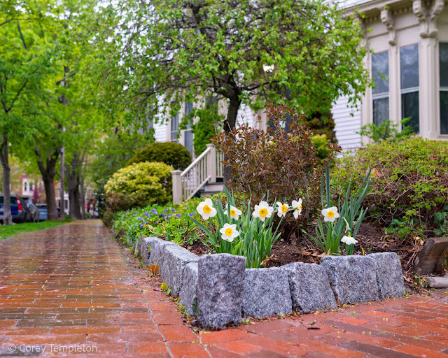 Portland, Maine USA May 2021 photo by Corey Templeton. May showers and flowers from Emery Street this morning.