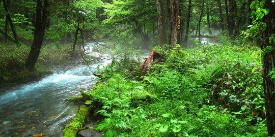 Daerah Penghasil Hutan