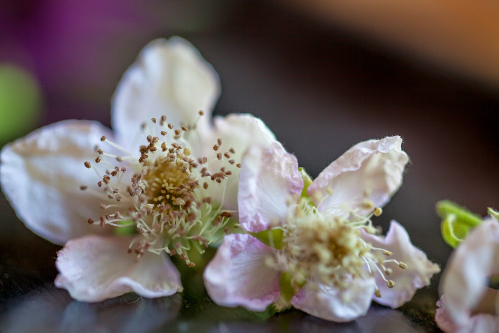Crackers on the Couch: Edible Flowers, Blackberry Flowers