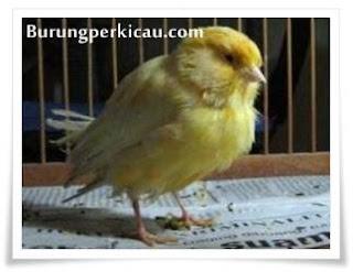 Burung kedinginan kena air hujan
