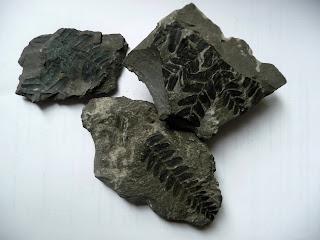 Оттиски растений на породе угольной шахты