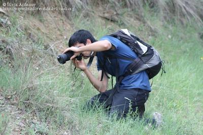 http://www.biodiversidadvirtual.org/insectarium/Testing-Punto-BV-Espacio-Pirineos-Graus-img586919.html