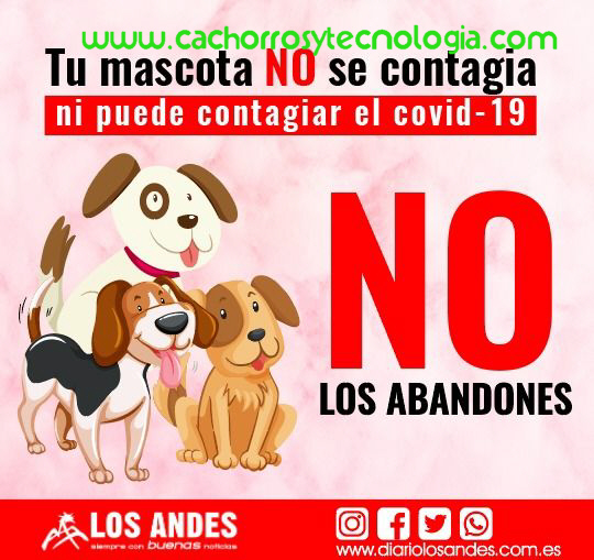 dog puppy NO transmite covid-19 Coronavirus cachorros tecnologia shurkonrad 2