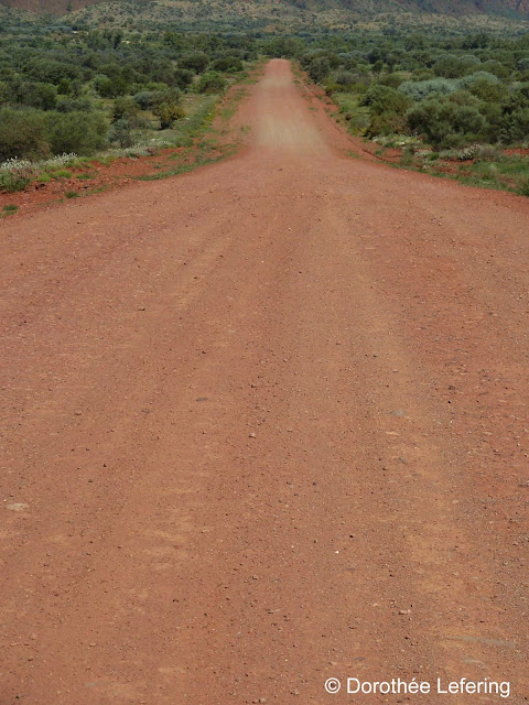 Red gravel road winds its way through green vegetation.