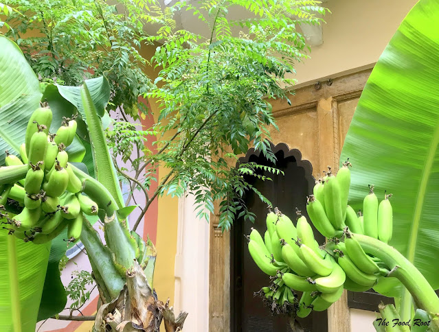 Nothing beats the joy of growing your own produce. These are the two big bunches of homegrown bananas and yet many more to come.