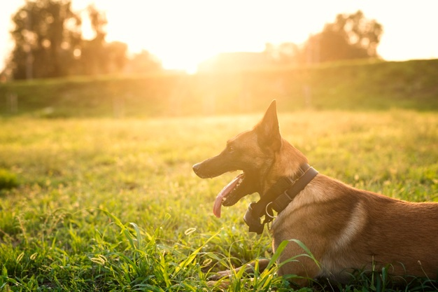 What a Professional Dog Trainer Can Do For You and Your Dog