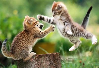 Foto de gatos jugando con sus garras