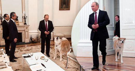 Putin aparece ante periodistas japoneses con su perra Yume