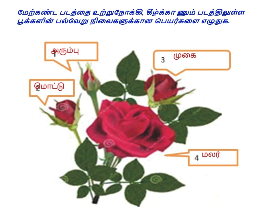 6th tamil assignment