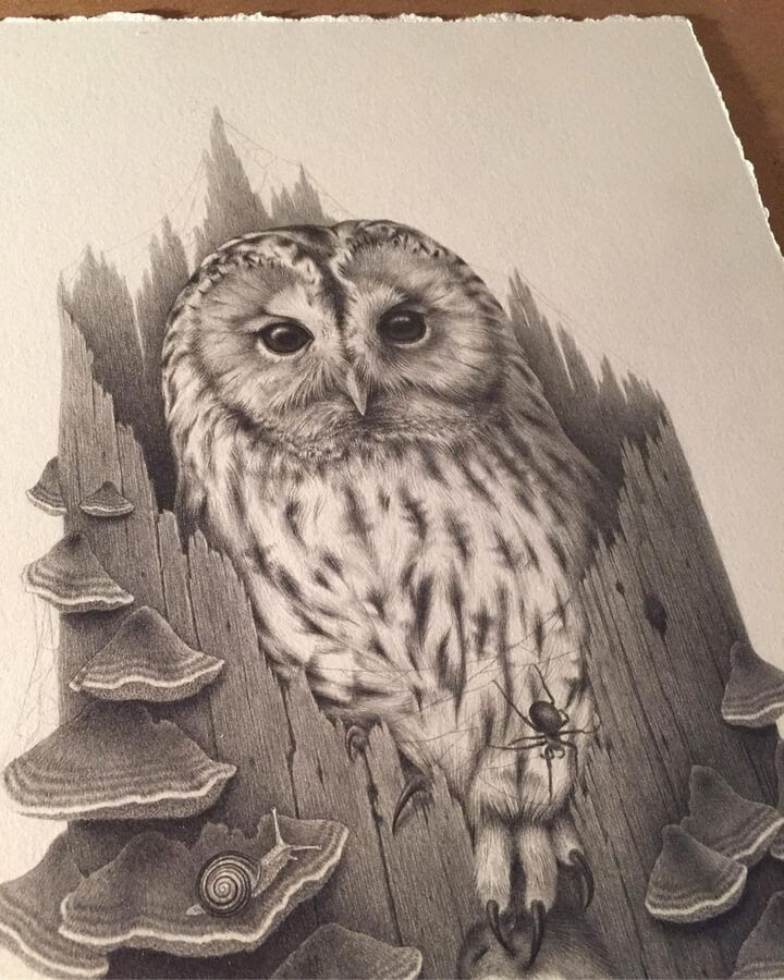 01-Comfortable-owl-Katrin-Berge-www-designstack-co