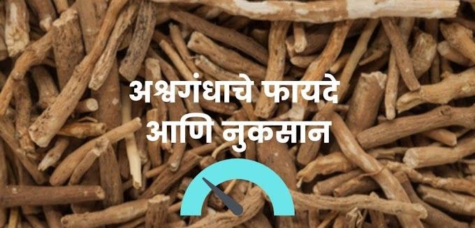 अश्वगंधा : फायदे , नुकसान | Ashwagandha benefits in Marathi