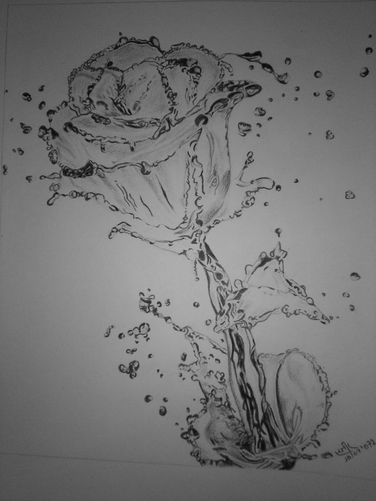 This is a sketch of a rose in watery form it seems in the sketch